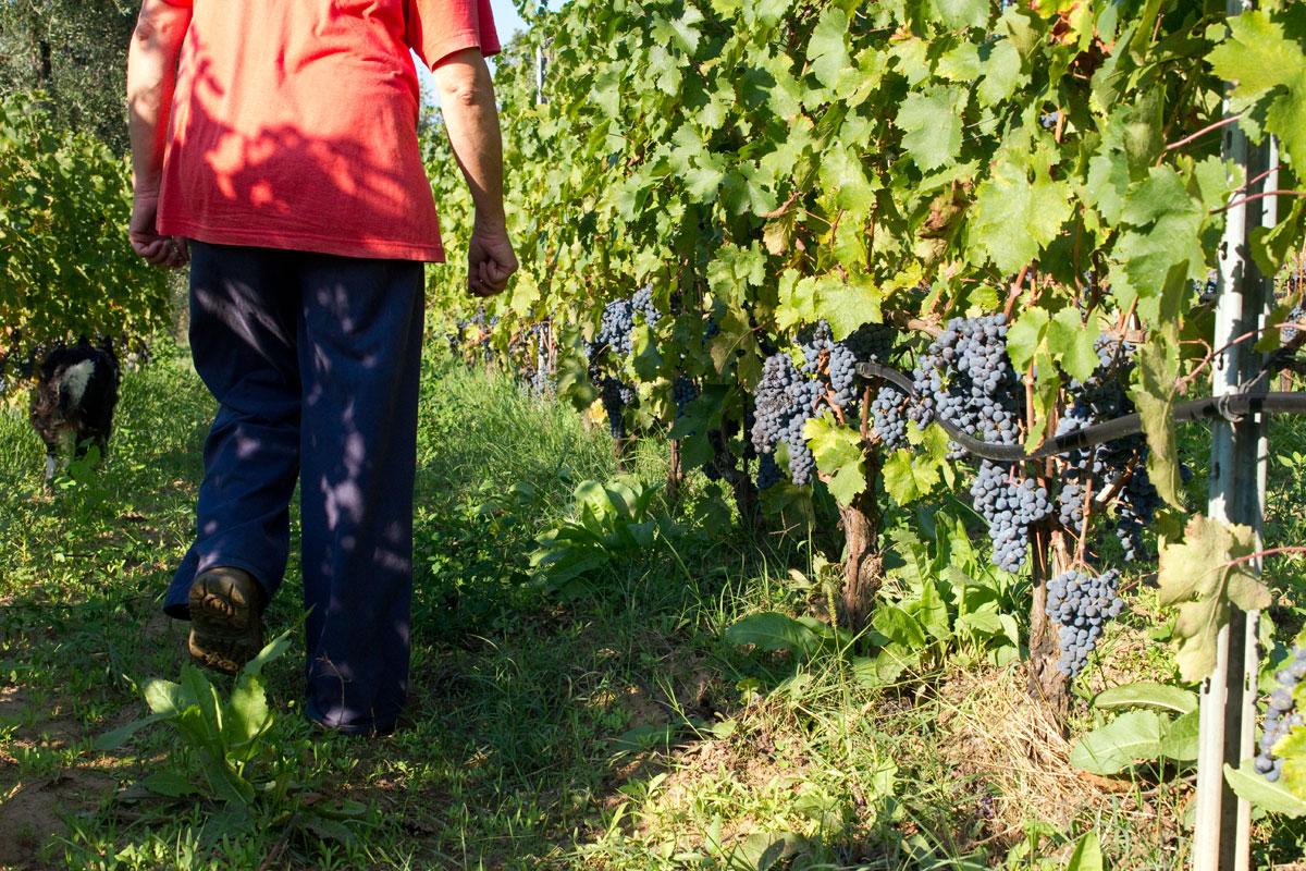 agriturismo produzione vino ed olio