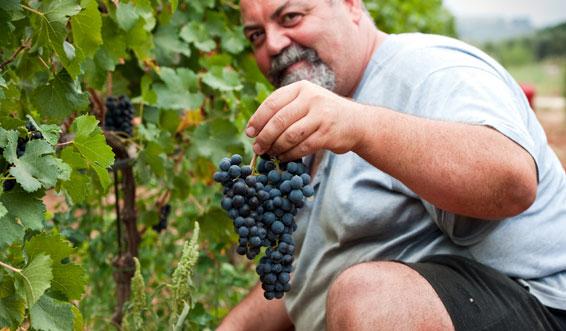 agriturismo produzione vino ed olio extravergine