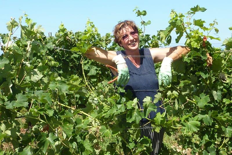 produttori vini bolgheri